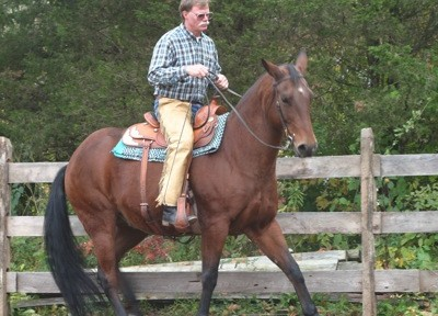 Correct rein back under saddle; notice the drape in the rein and the horse's coil. Here the horse is beginning to yield his chest.
