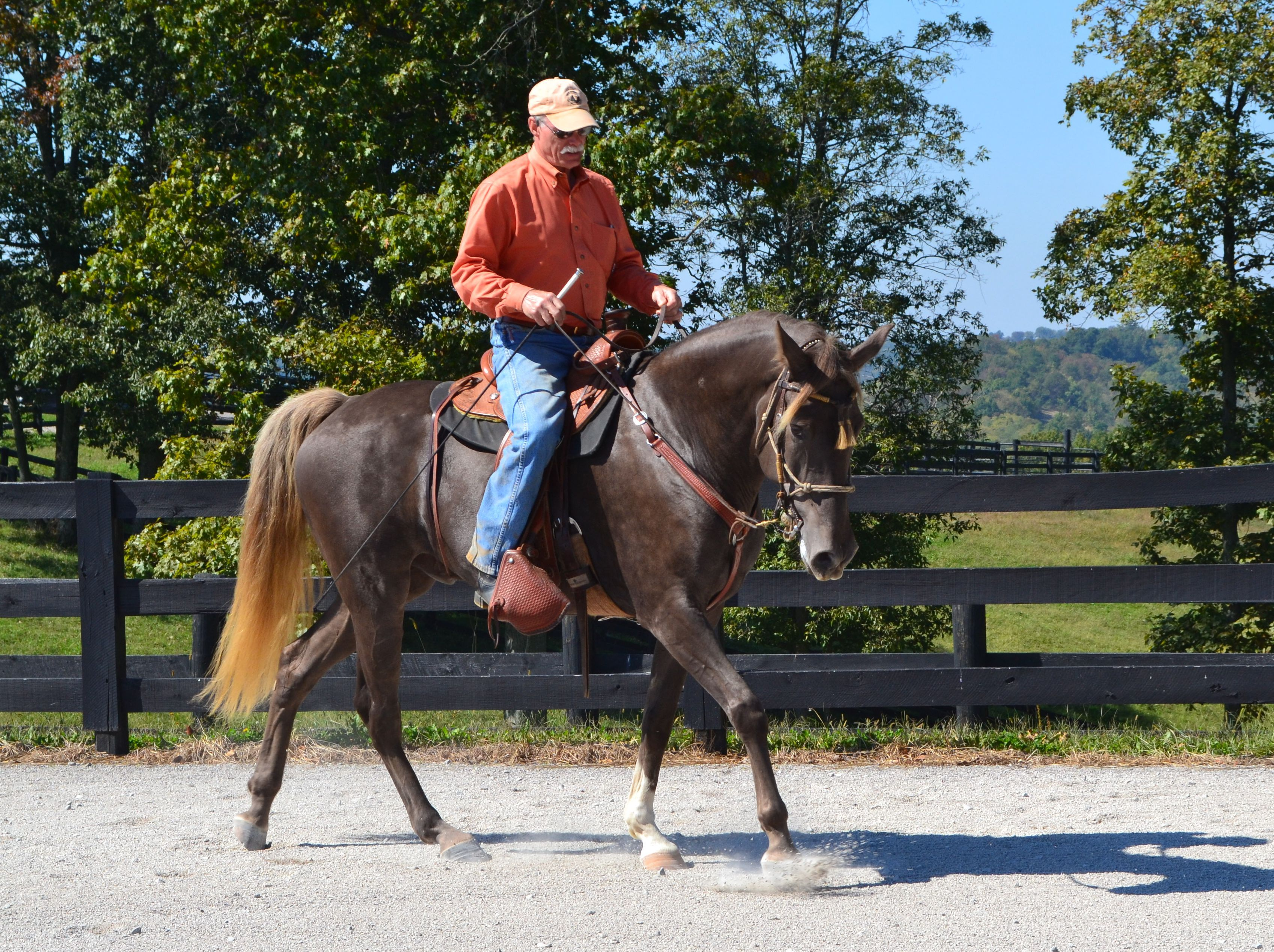 The Art And Science of Teaching the Gaited Horse